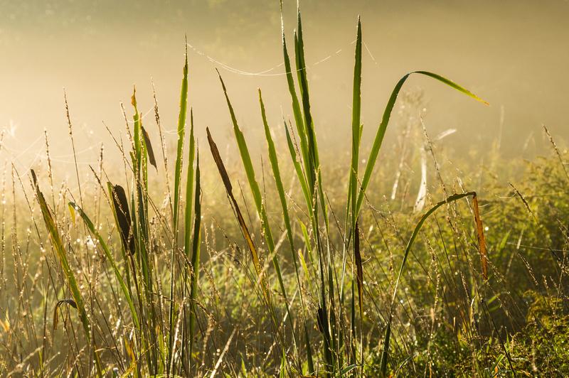 September Mist